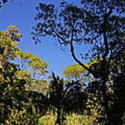 jungle in La Amistad National Park Panama 1 Art Print