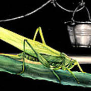La Locusta E Il Secchio Art Print
