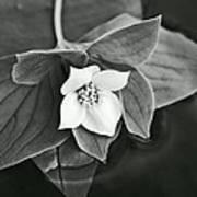 La Vie En Noir Et Blanc Art Print