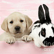 Lab Puppy And Bunny Art Print