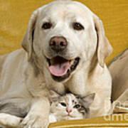 Labrador With Cat Art Print