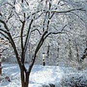Lacy Snowfall Art Print