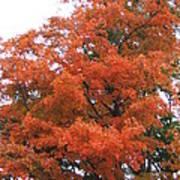 Lady Autumn - Tree Art Print by Margaret McDermott
