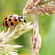 Lady Bug On A Warm Summer Day Art Print by Andrew Pacheco