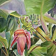 Lady Fingers - Banana Tree Art Print