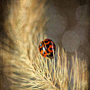 Ladybird Art Print by Darren Fisher