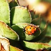 Ladybug And Chick Print by Chris Berry