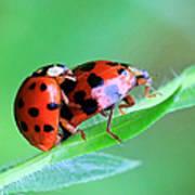 Ladybug And Gentlemanbug Art Print