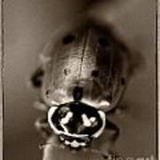 Ladybug On Green Leaf Art Print