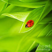 Ladybug On Leaves Print by Boon Mee