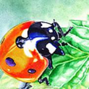 Ladybug On The Leaf Art Print