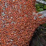 Ladybug Tree Art Print