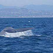 Laguna Whale Art Print