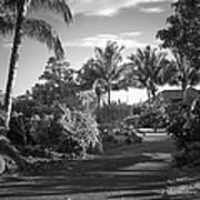 Lahaina Palm Shadows Art Print