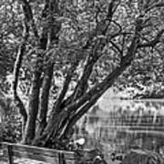 Lake Bench In Black And White Art Print