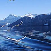 Lake Lucerne Seagulls Art Print