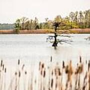 Lake Mattamuskeet Nature Trees And Lants In Spring Time  Art Print