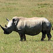 Lake Nakuru White Rhino Art Print