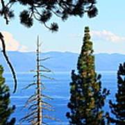 Lake Tahoe Tranquil Art Print by Saya Studios