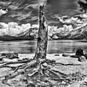 Lake Tenaya Giant Stump Black And White Art Print