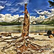 Lake Tenaya Giant Stump Art Print