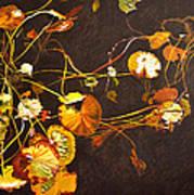Lake Washington Lily Pad 14 Art Print