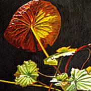 Lake Washington Lily Pad 18 Art Print