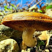 Lakeside Mushroom  Art Print