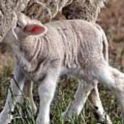 Lamb Babe Art Print
