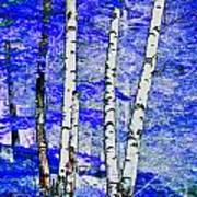 Land Of The Silver Birch Art Print