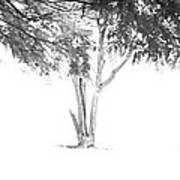 Landscape 14 Art Print