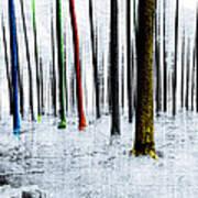Landscape Winter Forest Pine Trees Art Print