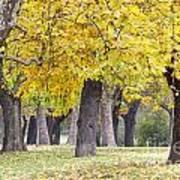 Landscape With Autumn Trees Art Print