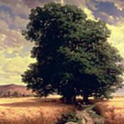 Landscape With Oaks Art Print