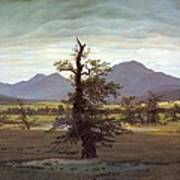 Landscape With Solitary Tree Art Print