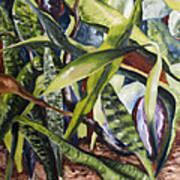 Languid Cactii Art Print by Lisa Boyd