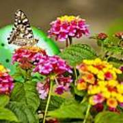 Lantana With Butterfly Art Print