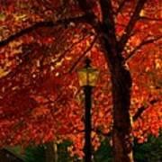 Lantern In Autumn Art Print