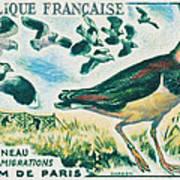 Lapwings Study Of Migration Museum Of Paris Art Print