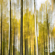 Larch Grove Blurred Art Print