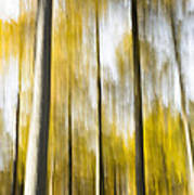 Larch In Abstract Art Print