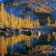 Larch Tree Reflection In Leprechaeun Lake  Art Print