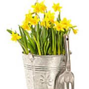 Large Bucket Of Daffodils Art Print by Amanda Elwell