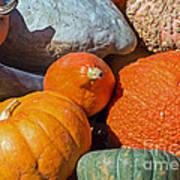 Large Edible Gourds Art Print