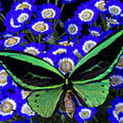 Large Green Butterfly Art Print