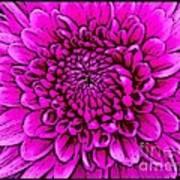 Large Pink Dahlia Retro Style Art Print