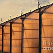 Large Scale Industrial Greenhouse Lit By Sunet Art Print