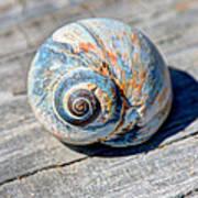 Large Snail Shell Art Print
