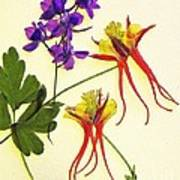Larkspur And Columbine Art Print