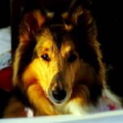 Lassie Come Home Art Print by Karen Wiles